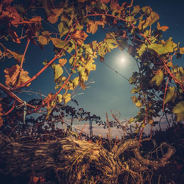 Mondscheinwanderung – die besondere Weinprobe
